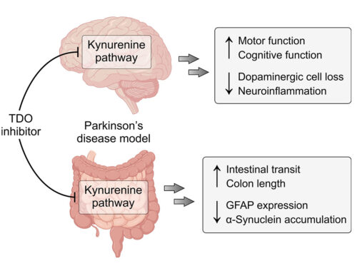 TDO is a novel therapeutic target for Parkinson's disease